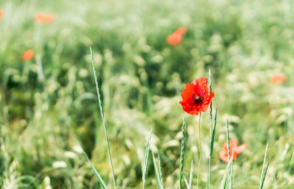 Inspiration – mit Vorfreude in den neuen Tag starten