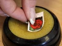 site_1_rand_491443042_stamp_rose_b_getty