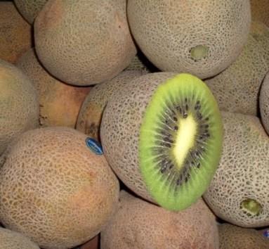 cantaloupe-kiwi-copy