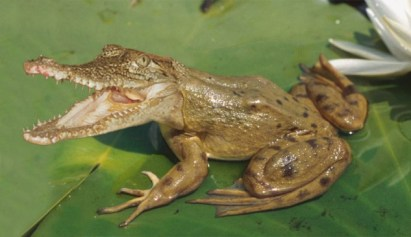 gator-frog-copy