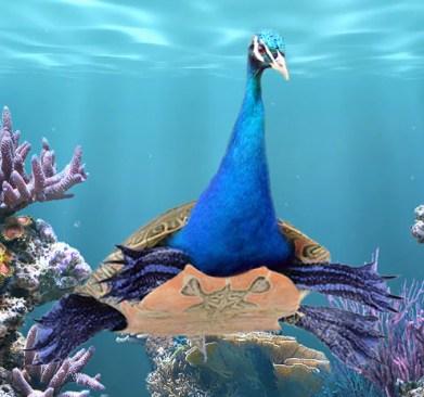 peacock-turtle-copy