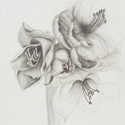 Bleistift auf Papier • 21 x 29,7 cm