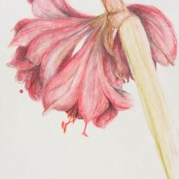 Bleistift und Aquarellstift auf Papier • 21 x 29,7 cm