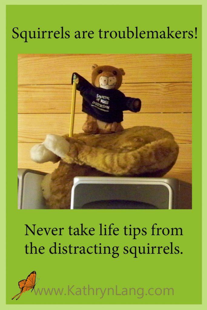 distracting squirrel