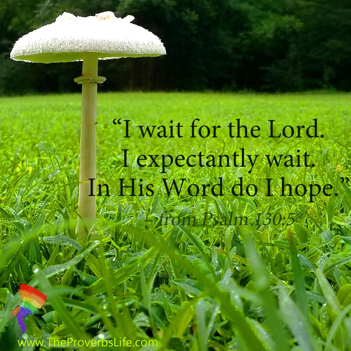 Scripture Focus Psalm 130:5