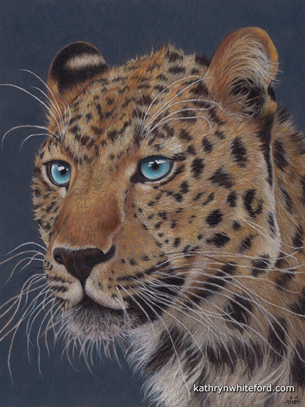 """""""Amur Leopard"""" Coloured pencils on Colourfix paper, 9x12 inches"""