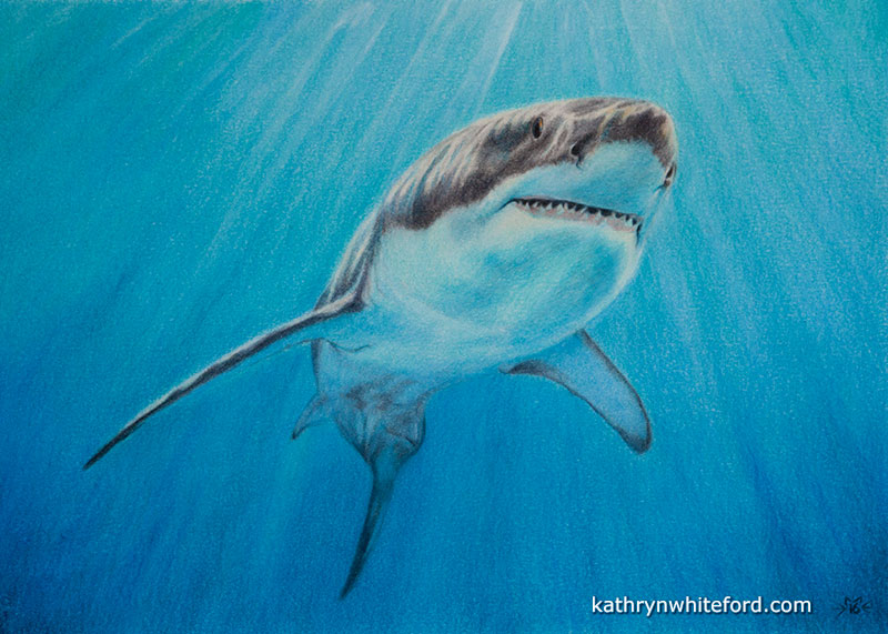 """""""Graceful"""" Coloured pencils on watercolour paper, 11x14 inches"""