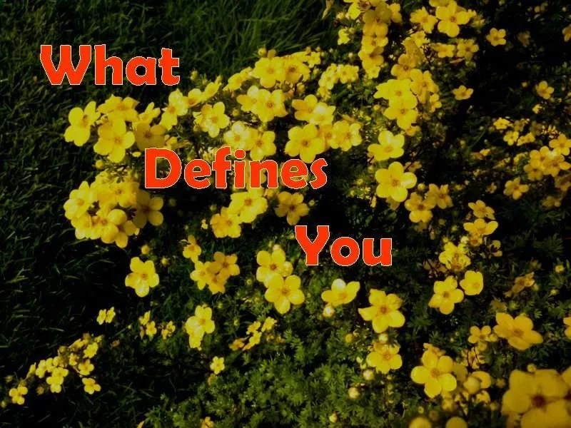 A green bush covered in yellow flowers with the title What Defines You.
