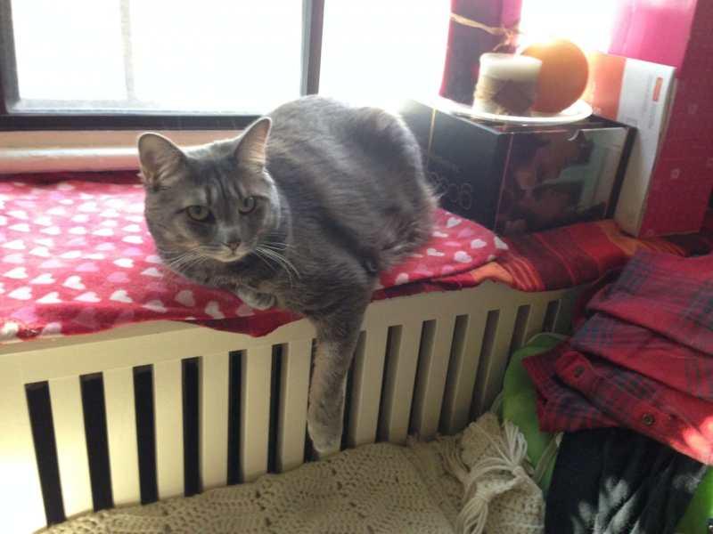 Mabel keeping warm.