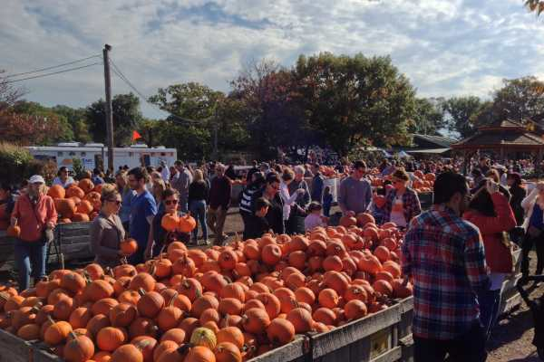 Family Trip to Linvilla Orchards on Katie Crafts; https://www.katiecrafts.com