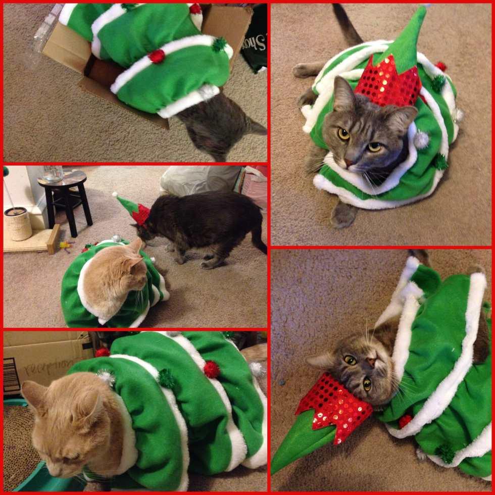 Wordless Wednesday: Christmas Kitties on Katie Crafts; http://www.katiecrafts.com