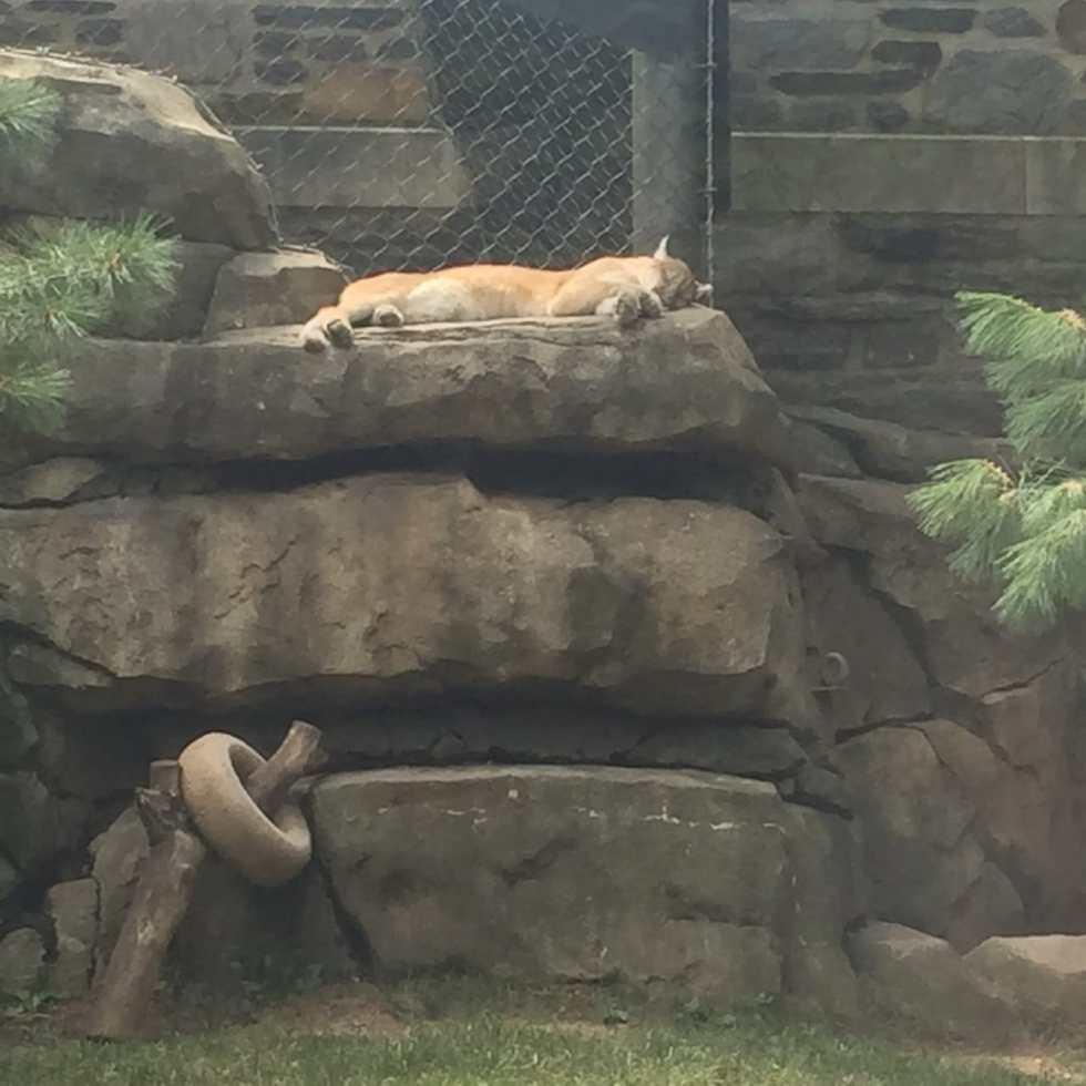 Philadelphia Zoo! on Katie Crafts; http://www.katiecrafts.com