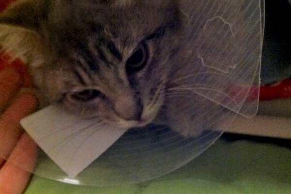 Wordless Wednesday: Kitty Adoption Day on Katie Crafts; https://www.katiecrafts.com