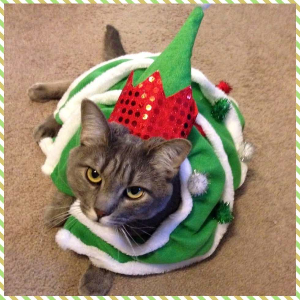 Throwback Thursday: Mabel the Christmas Tree on Katie Crafts; http://www.katiecrafts.com