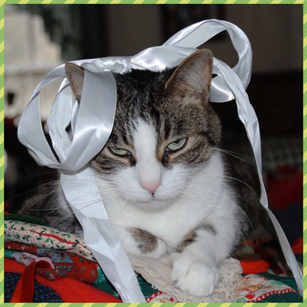 Flashback Friday: Spud Hates Christmas on Katie Crafts; http://www.katiecrafts.com