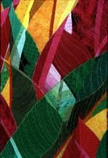 Leaves (2000) - Katiepm