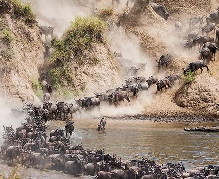 The Great Wildebeest Migration Safari in August
