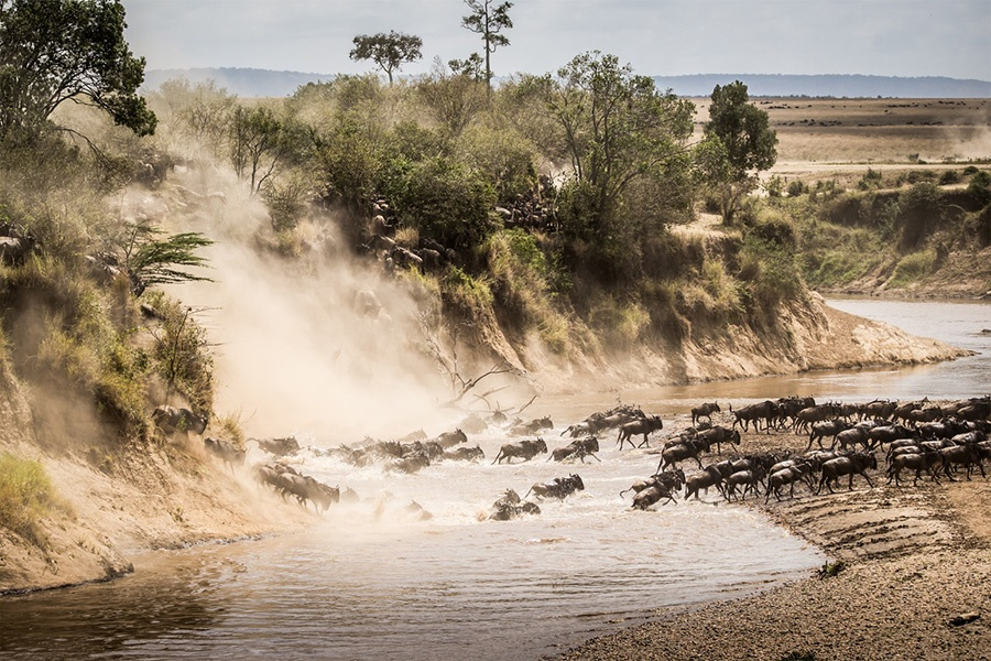 Crossing in Northern Serengeti
