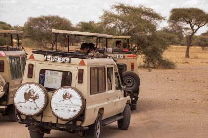 Budget Photo Safari in Africa