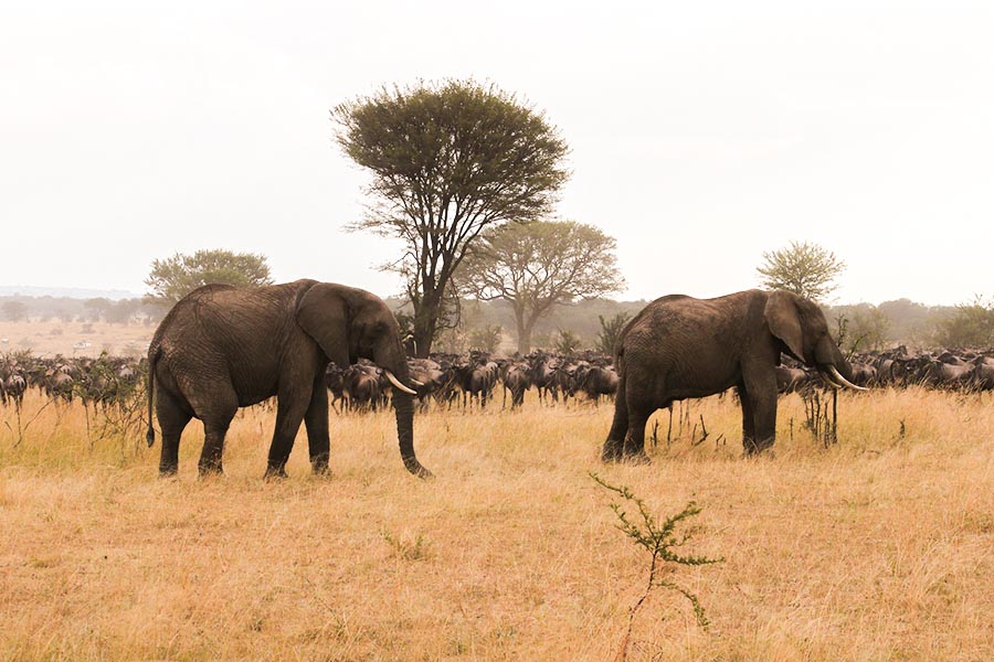 Luxury Migration Safari