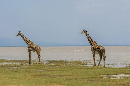 Price Guarantee-katikati Safaris