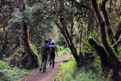 02 Days Kilimanjaro hike tour