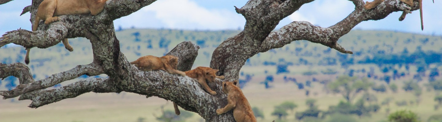tanzania safari and coronavirus