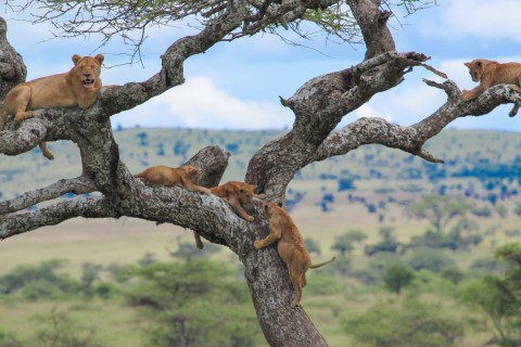 tanzania safari and coronavirus