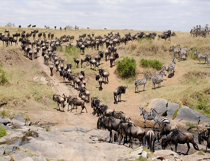 luxury migration safaris