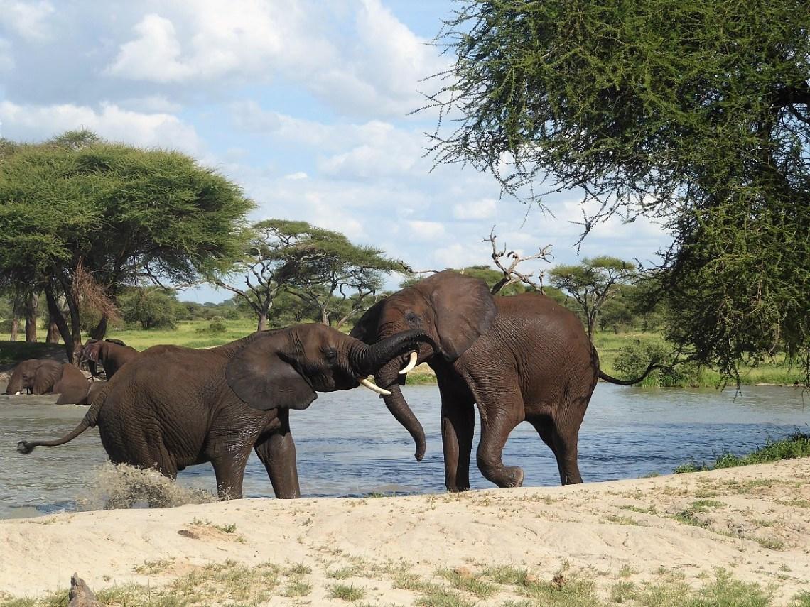Couple Tour in Tanzania