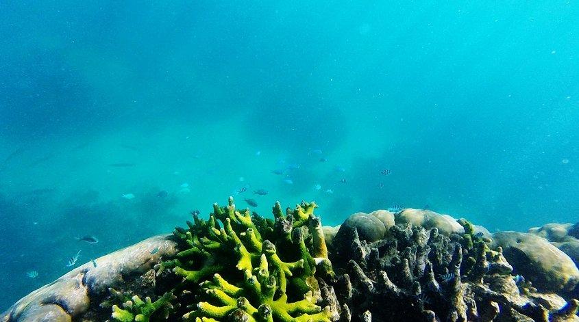 ningaloo reef coral coast