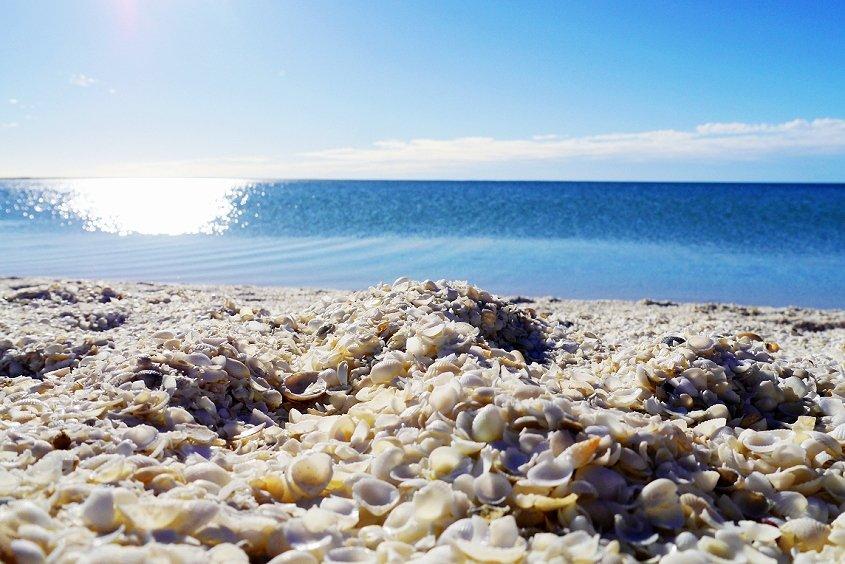 shell beach coral coast