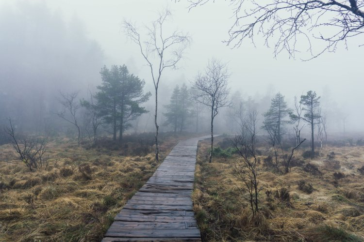Image of boardwalk and trees in the fog during the hike to Pulpit Rock in Norway