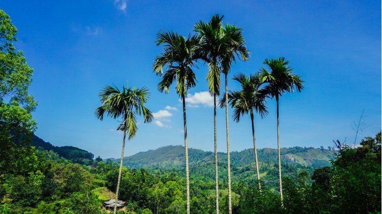 5 amazing areas of Sri Lanka to visit