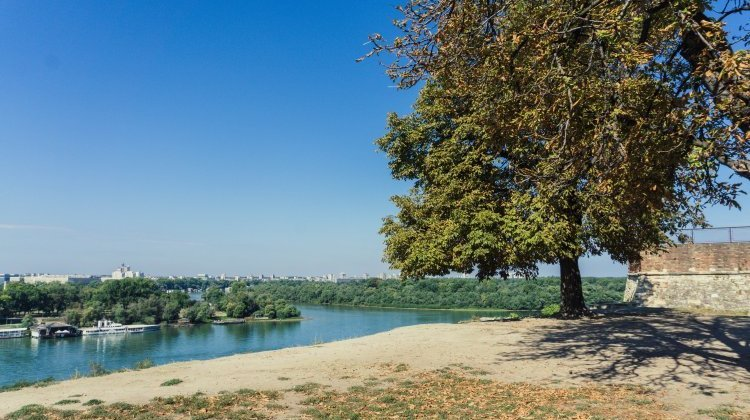 View over Danube river from Belgrade Fortress with tree in foreground