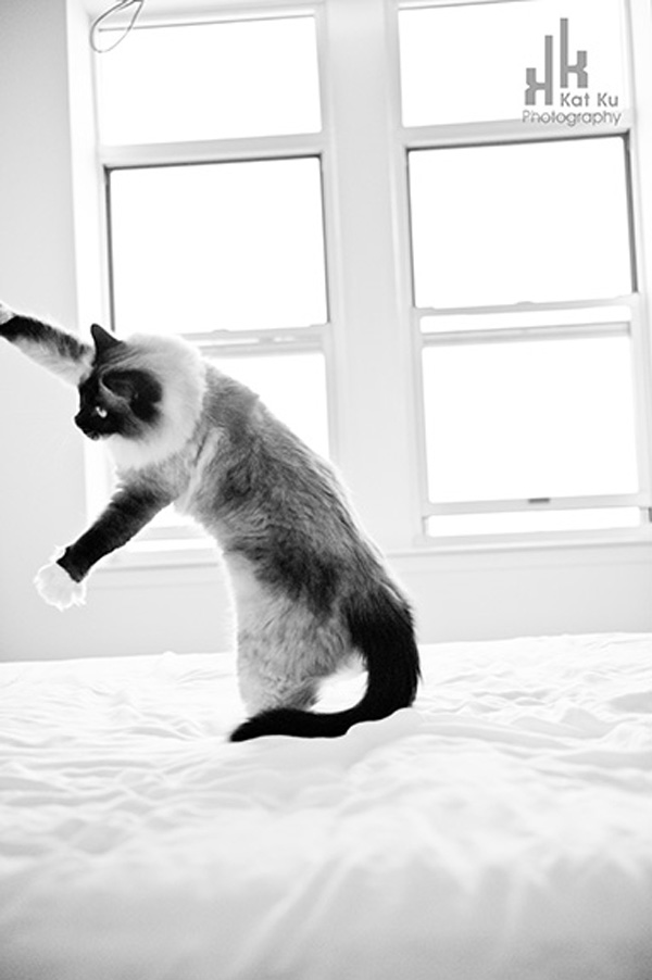 Achilles-Dancing-Cat-4