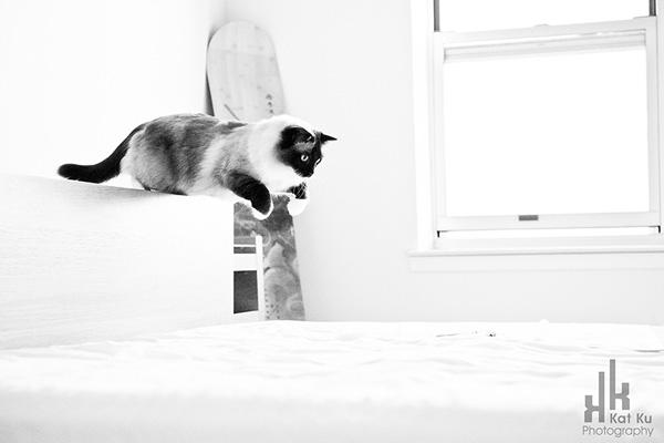 Achilles-Dancing-Cat-6