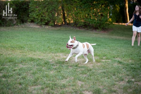 Michigan-Pet-Photography_Mellow-the-Pitbull_-29