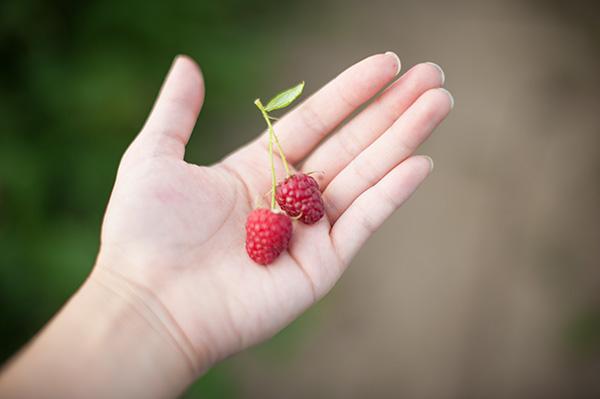 Pure Michigan_Kat Ku_Makielski Berry Farm_14