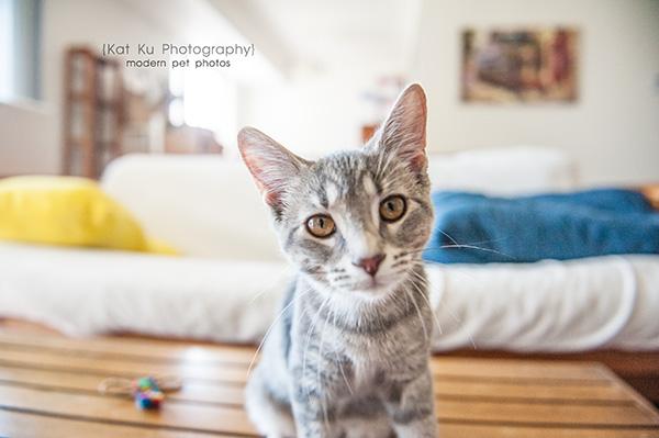Kat Ku Photography_Tiny Lions Cat Rescue_Michelle_01