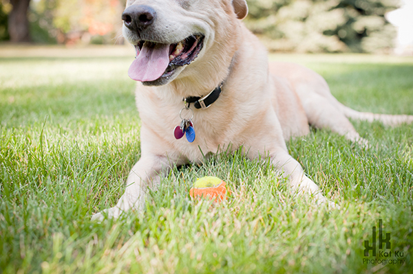 Rochester-Hills-Pet-Photography_08