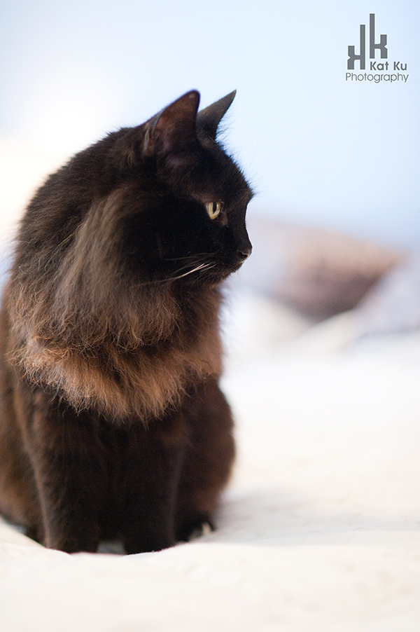 Aladdin_Modern-Cat-Photography_05