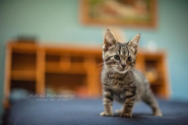 Adoptable Kittens_03