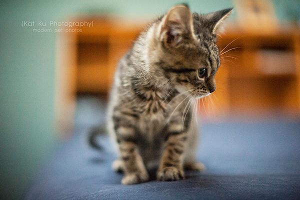 Adoptable Kittens_06