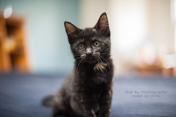 Adoptable Kittens_11