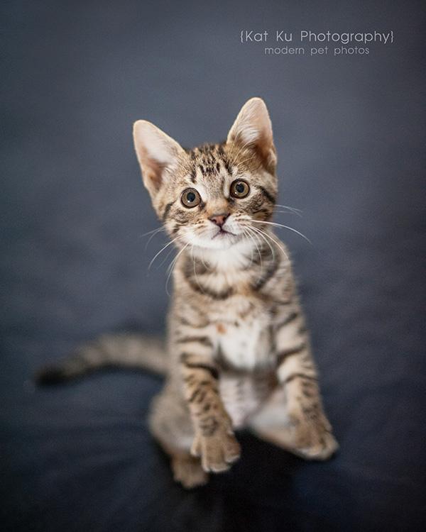 Adoptable Kittens_13