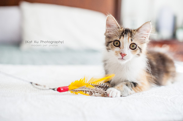 Kat Ku Photography - Snixle, Smudge, and Hannah Piper-18
