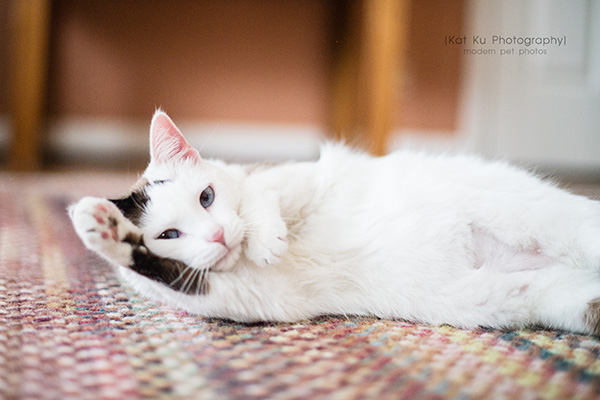 Kat Ku Photography_Adopt Duchess the Cat_03