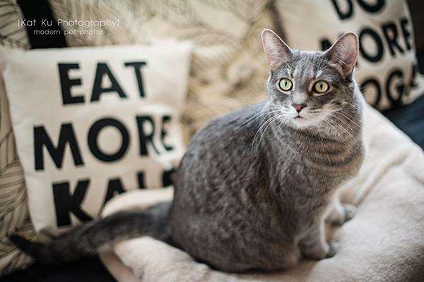 Kat Ku Photography_Dorian the Gray Cat11