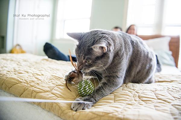 Kat Ku Photography_Dorian the Gray Cat16